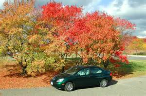 Prius in fall